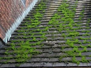 Det finns kvalificerade lösningar som tar bort och avlägsnar mossa från tak