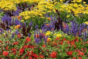 blommor i en välskött trädgård